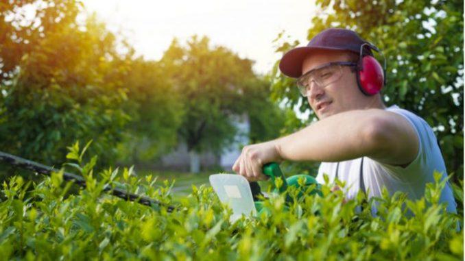 paysagiste-entretien