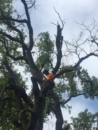 La destruction des nids