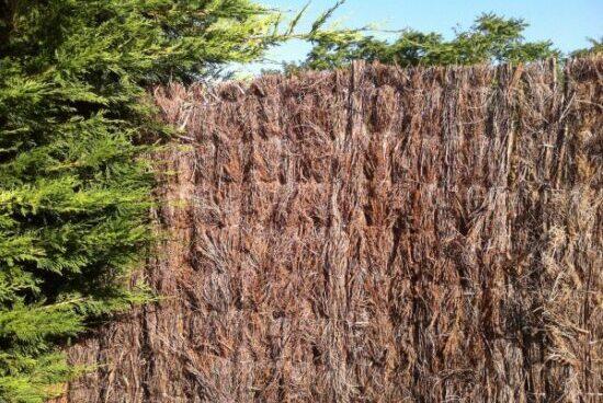 clôture naturelle pour fermer son terrain
